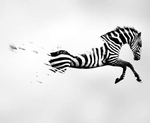 Diseño Zebra Yatatu
